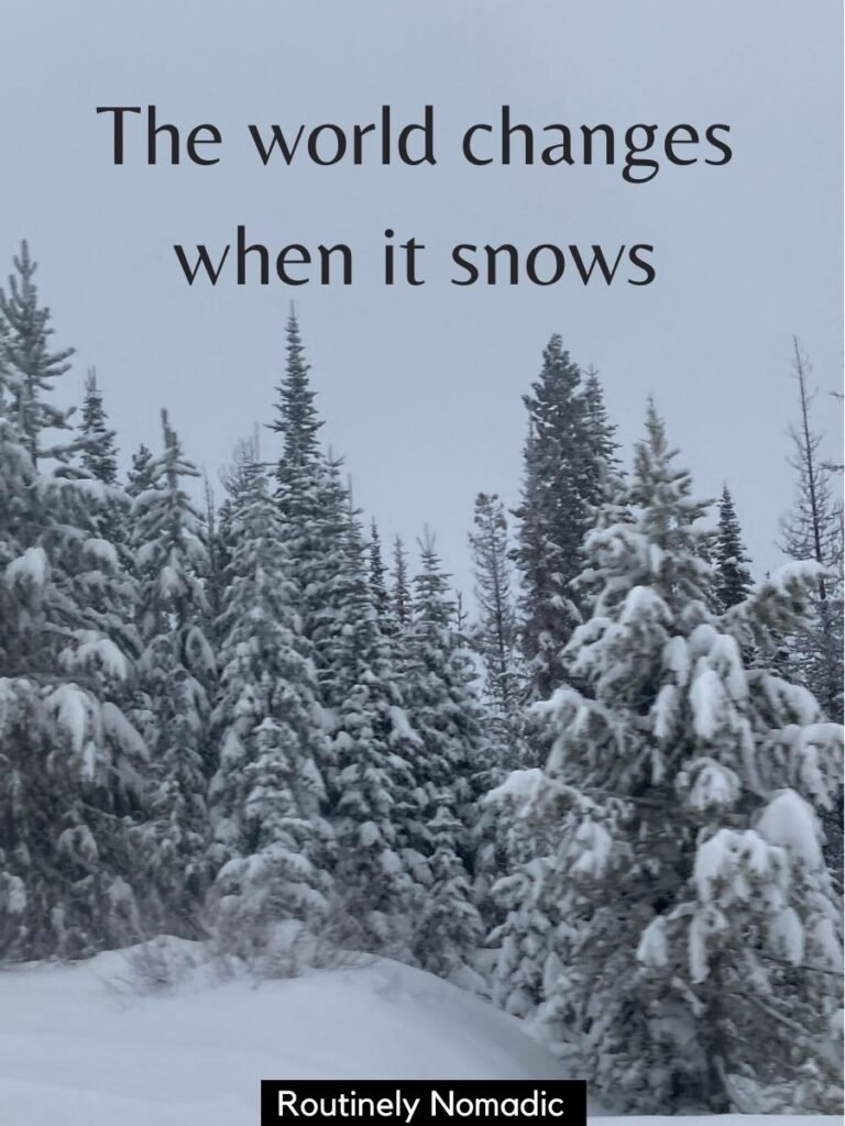 Snowy trees and grey skies with a snow Instagram captions that reads the world changes when it snows