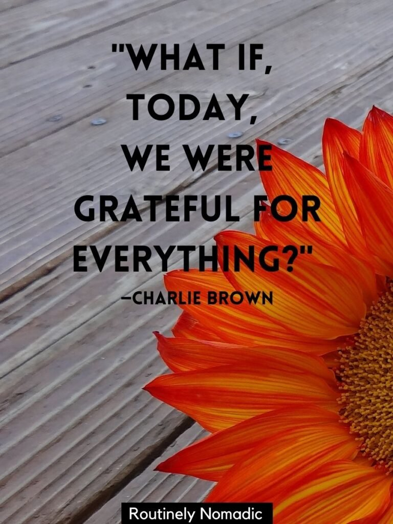 A orange sunflower with a Thanksgiving quotes for Instagram by Charlie Brown
