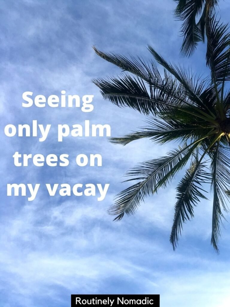 A palm tree against the sky with the vacay captions that says seeing only palm trees on my vacay