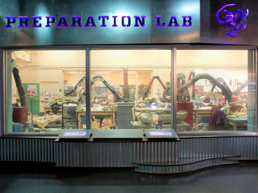 Looking through the preparation lab windows at the Drumheller dinosaur museum