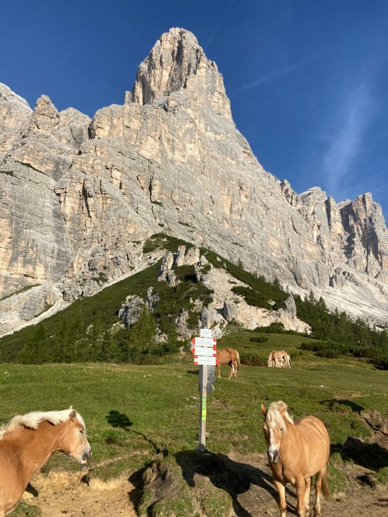 sign posts on the alta via 1 with horses