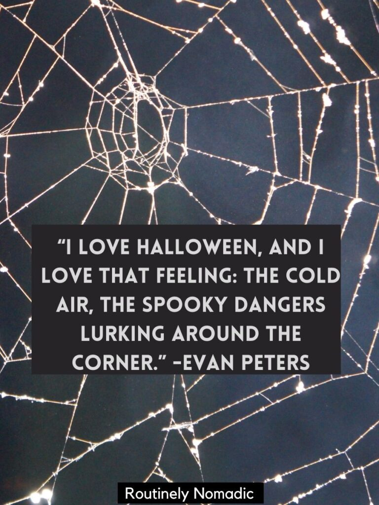 Spider web with a funny Halloween quotes by Evan Peters