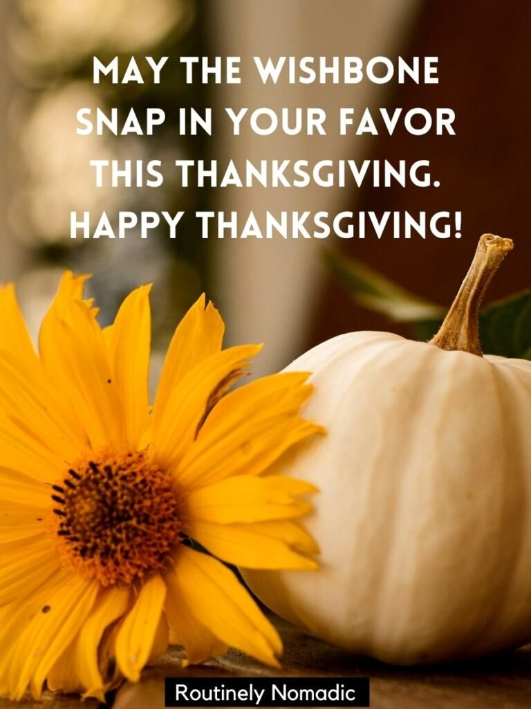 Flower and a pumpkin with a funny happy thanksgiving quotes and sayings