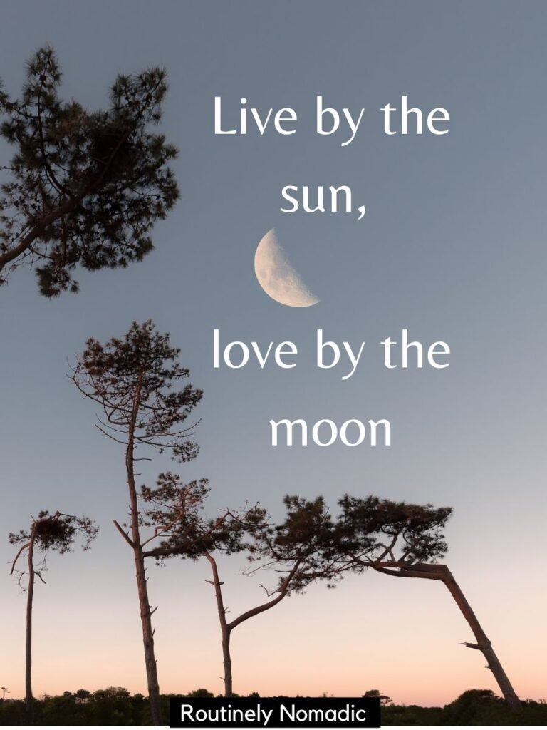 Moon at sunset with trees and captions about moon and sun