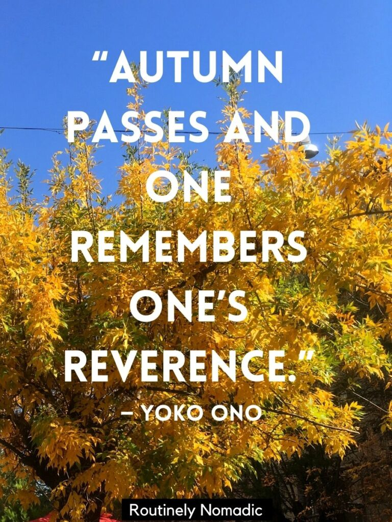 Yellow fall leaves and a short autumn quotes by Yoko Ono