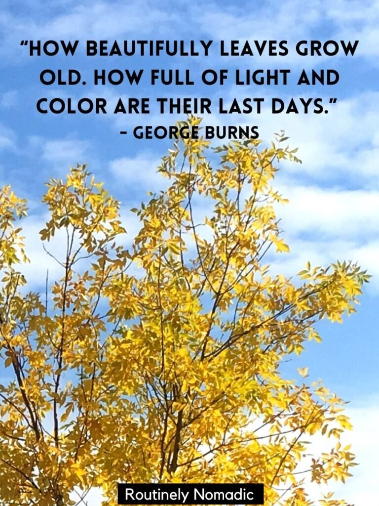 Yellow fall leaves on a blue sky with a short fall quotes by George Burns