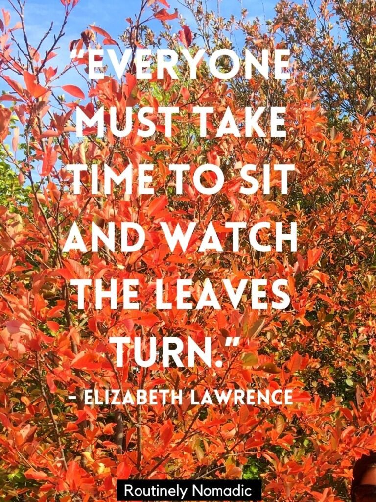 Orange fall leaves with a short fall quotes for Instagram by Elizabeth Lawrence